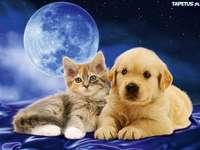 macskák kutyák