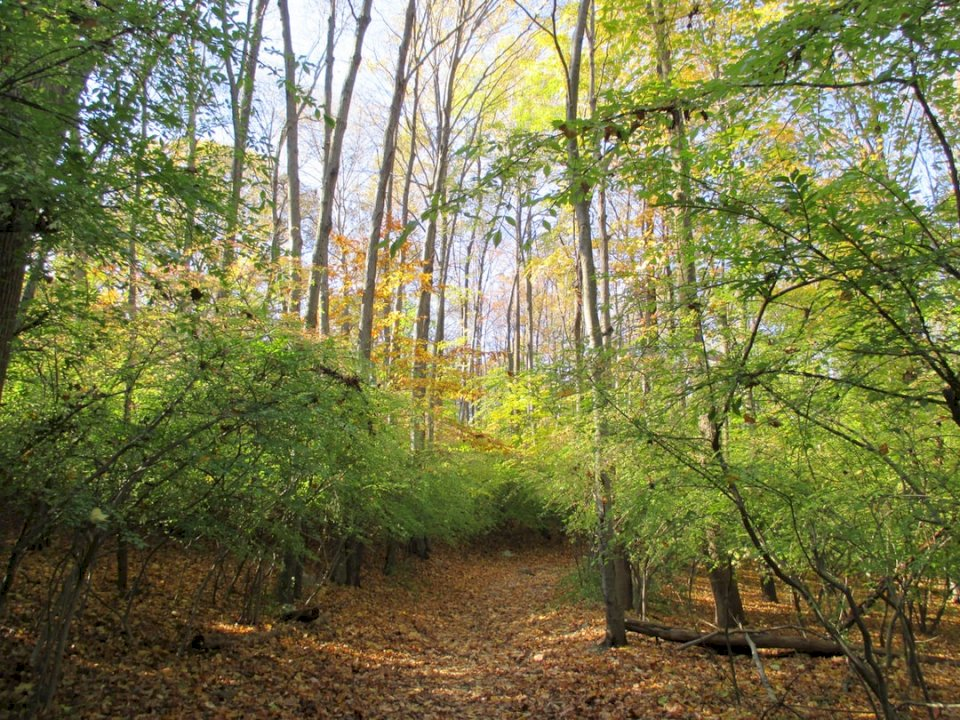 New Jersey Woods