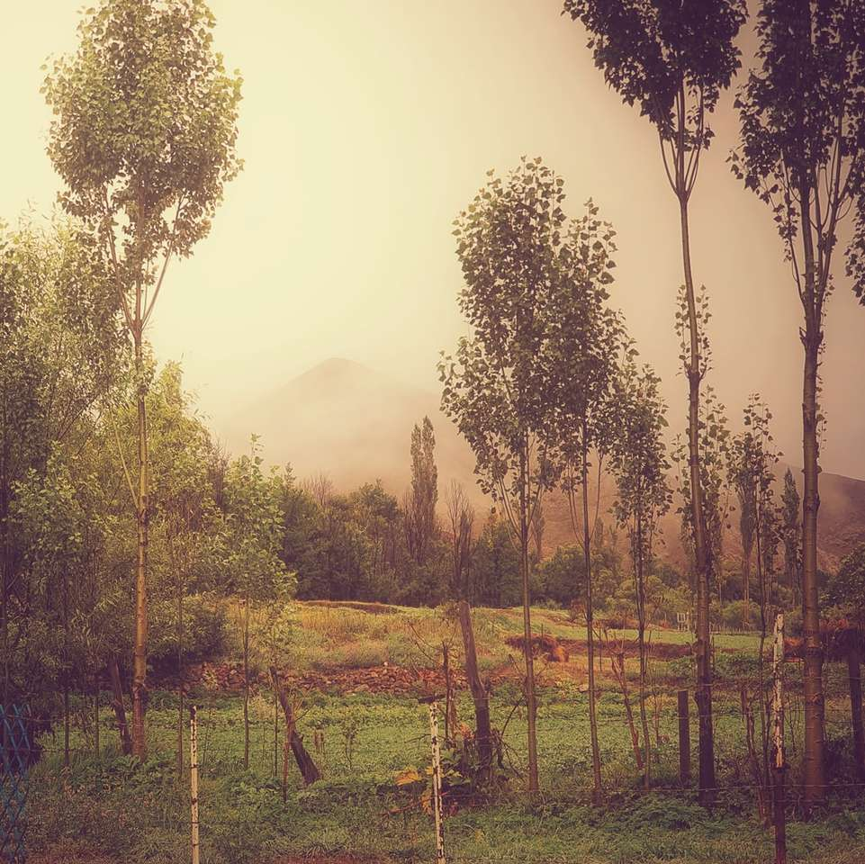 campo di erba verde con alberi durante il giorno
