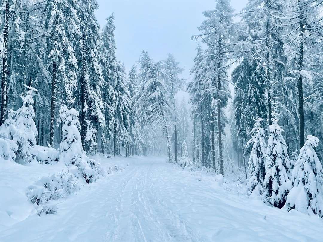 сняг покрити дървета през деня онлайн пъзел