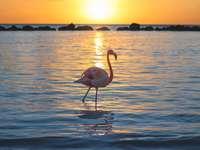flamingo roz pe corpul de apă în timpul zilei