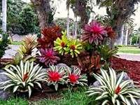 Grupa palm
