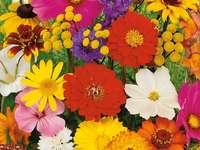fiori d'estate