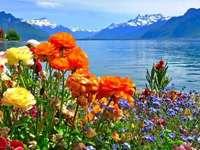 Blumen und Wasser
