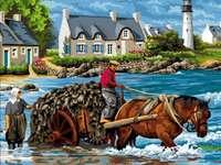Algenernte in der Bretagne