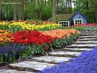 Schöner Blumengarten